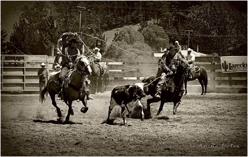 Team-roping, Rodeo, sepia
