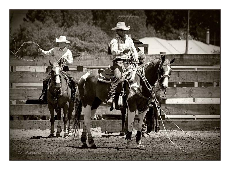 Cowboy Rodeo sepia horse