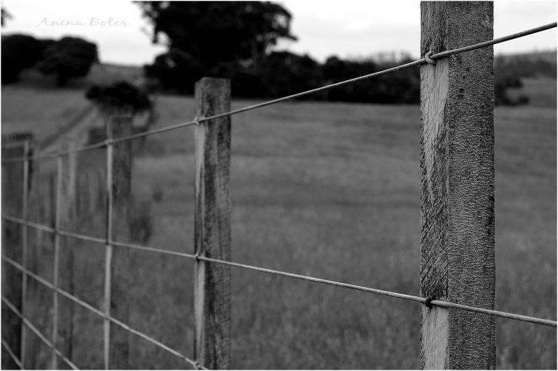 Fence, farm, B&W