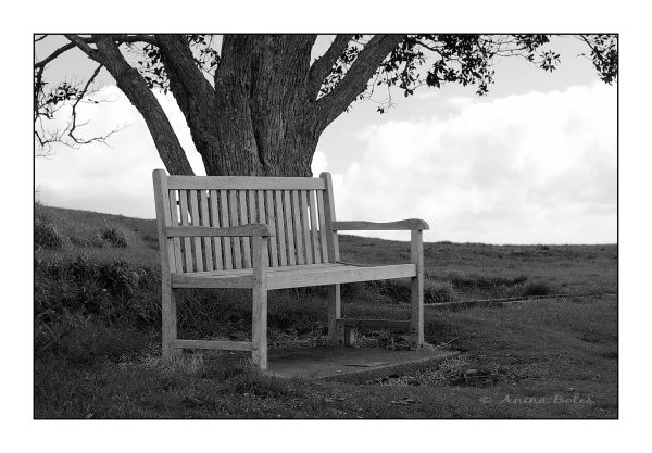 tree, bench, B&W