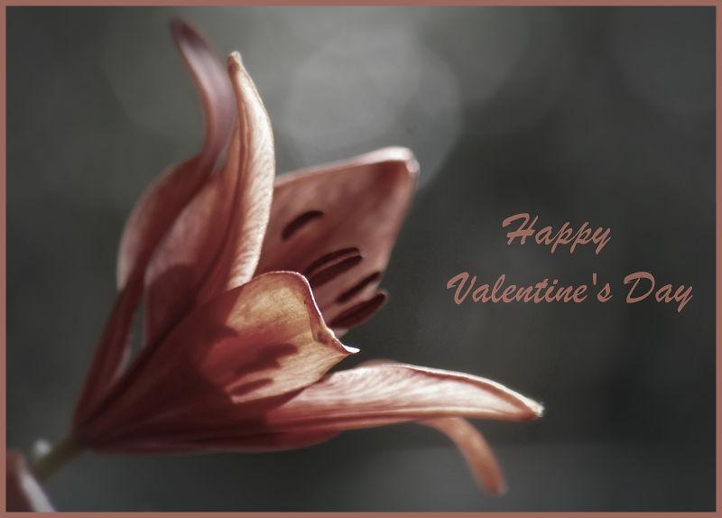 Valentine's Day, Lily