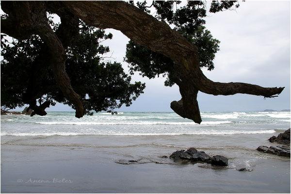Beach, Tree, Seaside