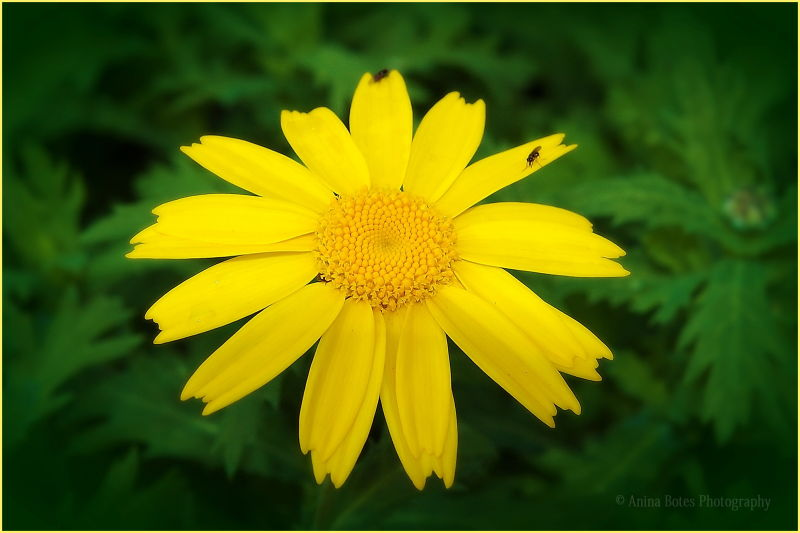 Flower, Yellow, Green, Summer