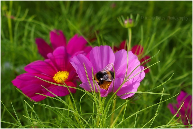 Pink, Green, Flowers, Bee