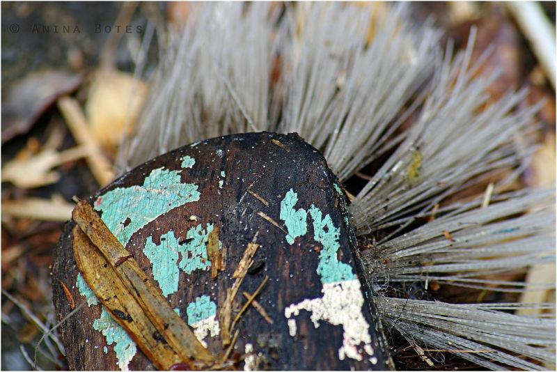 Old Broom, Wet, Macro, Colorspotlight