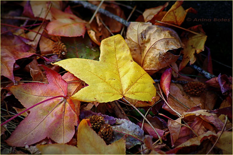Autumn, leaves, yellow, red, color