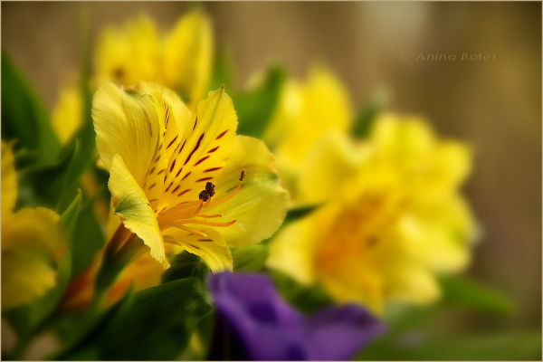 Flower, Yellow, Macro