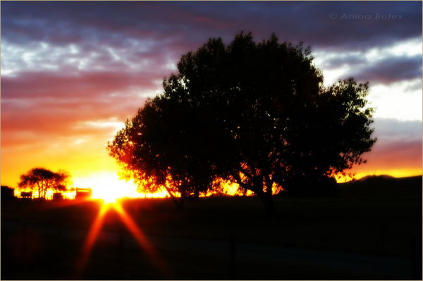 Sunset, Trees, Silhouettes, 300th