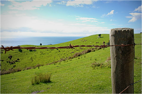 Fence, rural, blue, green, ocean, NZ