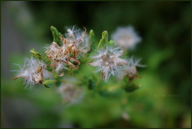 Plant, Green, Macro