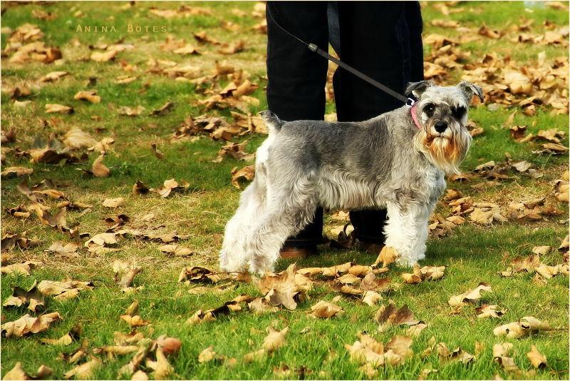 Dog, Lady, Autumn, Happy Silly Tuesday, NZ