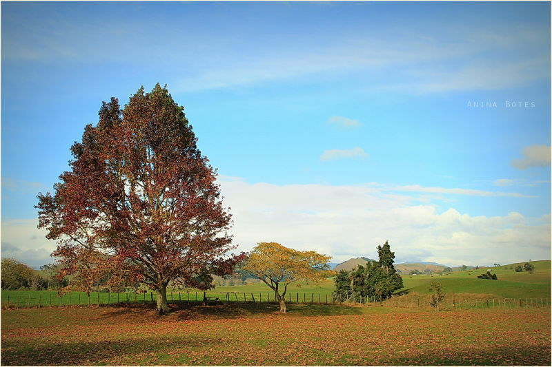 Autumn, Landscape, NZ