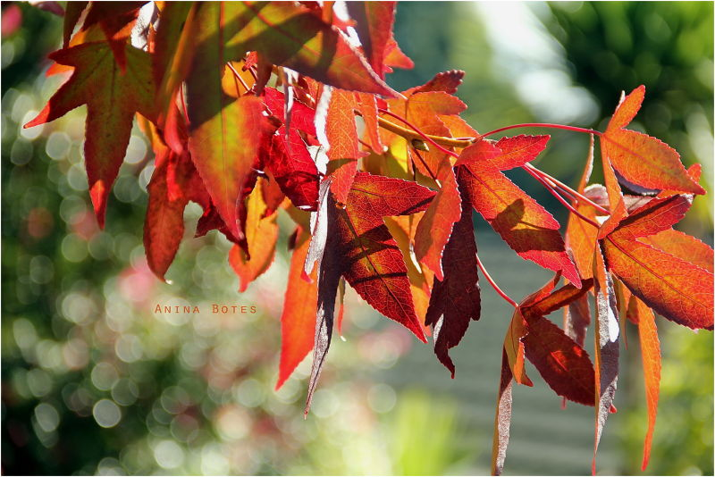 Autumn, Orange, Green, Light, Bokeh, NZ