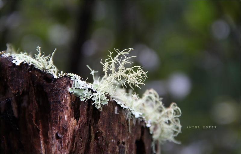 Forest Lichens, Green, Winter, Bokeh, Macro, NZ