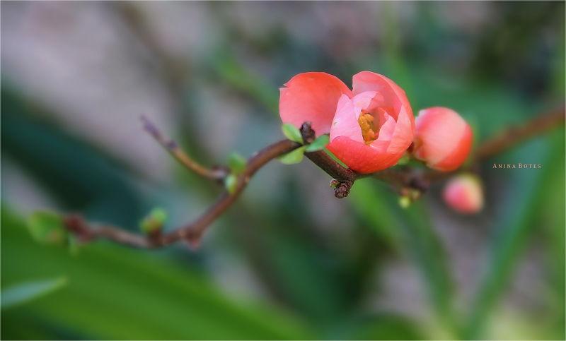 Orange, Peach, Blossom, Flower, Colour, NZ