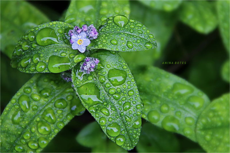 Green, Macro, Droplets, Rain, NZ