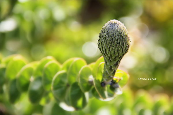 Plant, Green, Macro, NZ