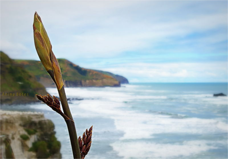 Plant, Sea, Ocean, DOF, NZ