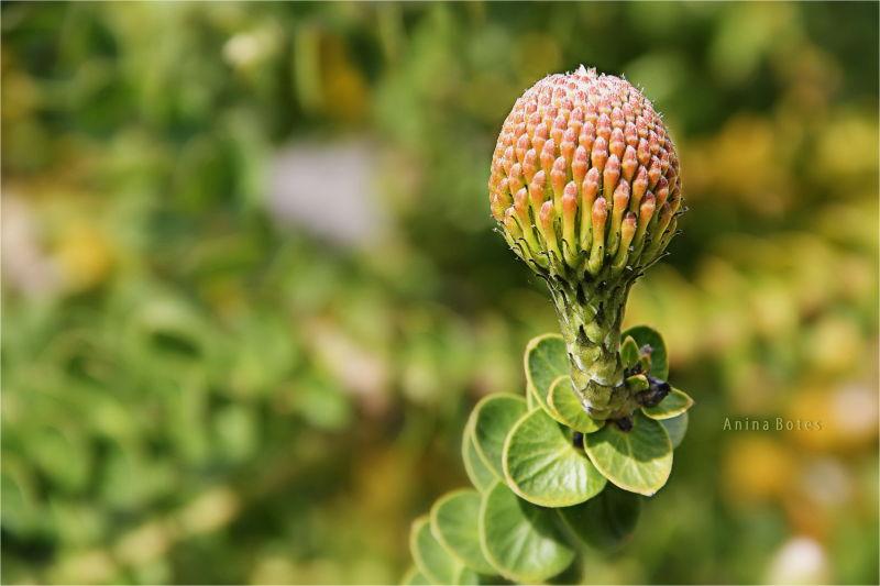 Plant, Macro, NZ