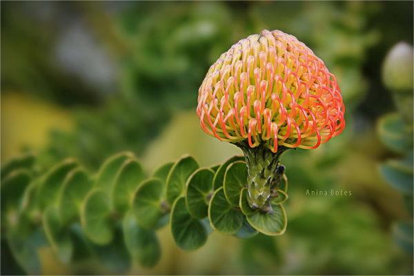 Plant, Flower, Macro, NZ