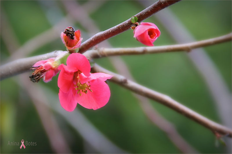 Blossom, Spring, Colour, Pink, NZ