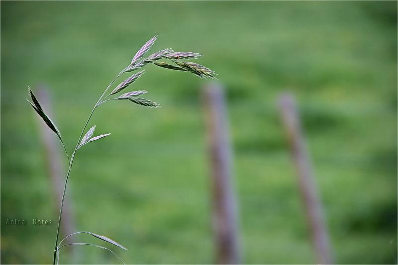 Green, Grass, Farm, NZ