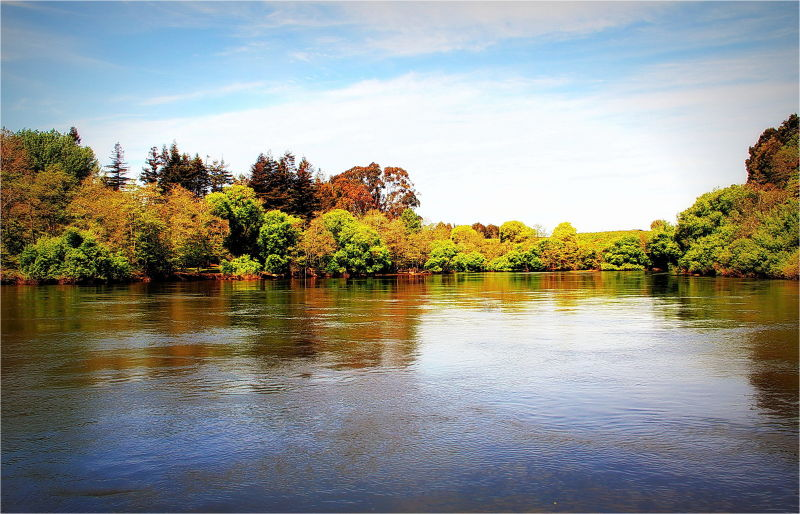Waikato River, Spring, Trees, Color, NZ