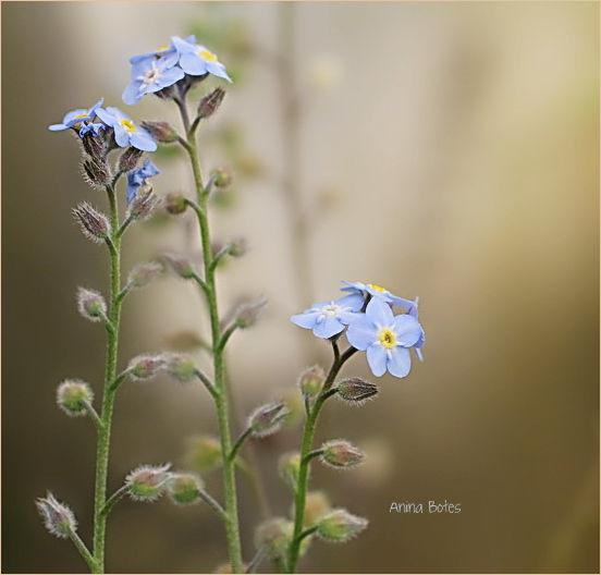 50mm, weed, flowers