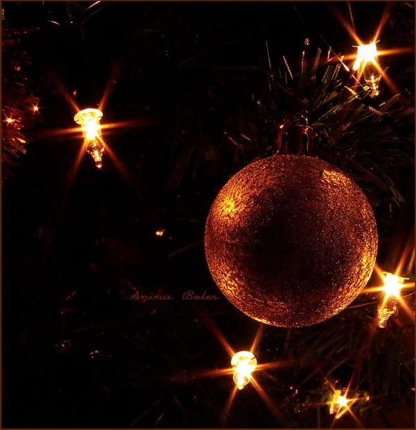 Christmas, Tree, Lights, NZ