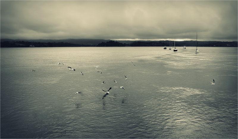 Ohope, Wharf, Morning, Mist, Gulls