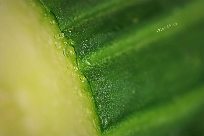 Cucumber, Green, Macro