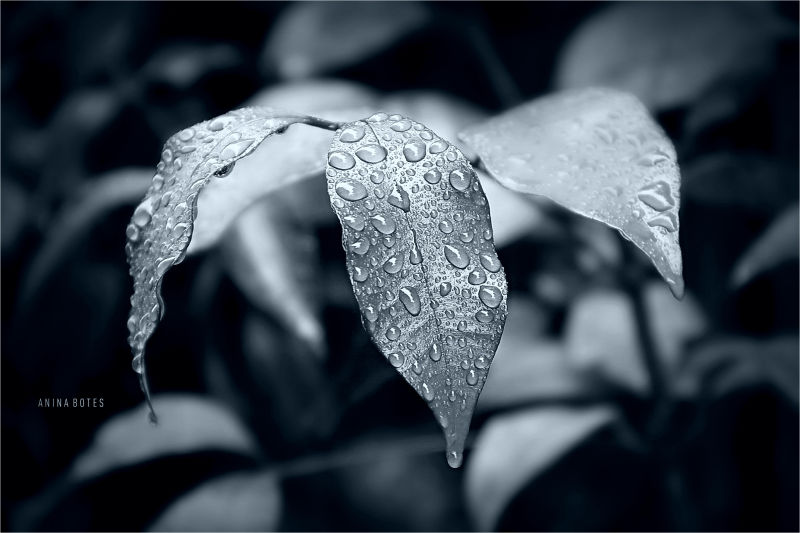 Drops, Plant, Leaves, Tint