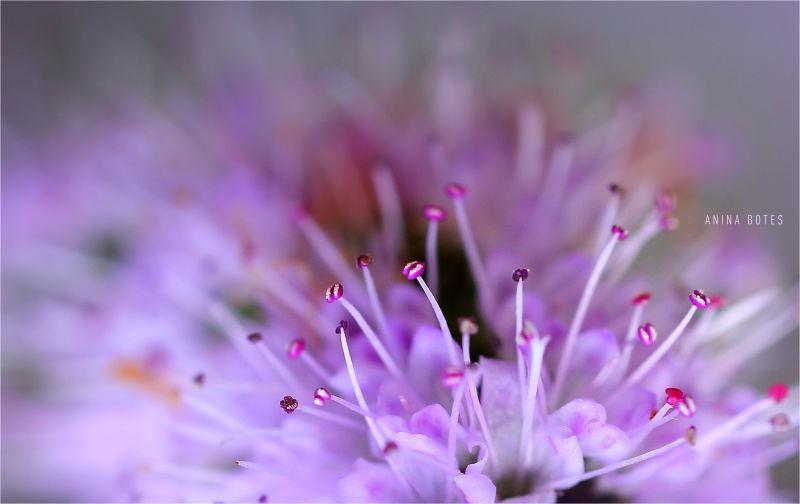 Flower, Purple, Macro