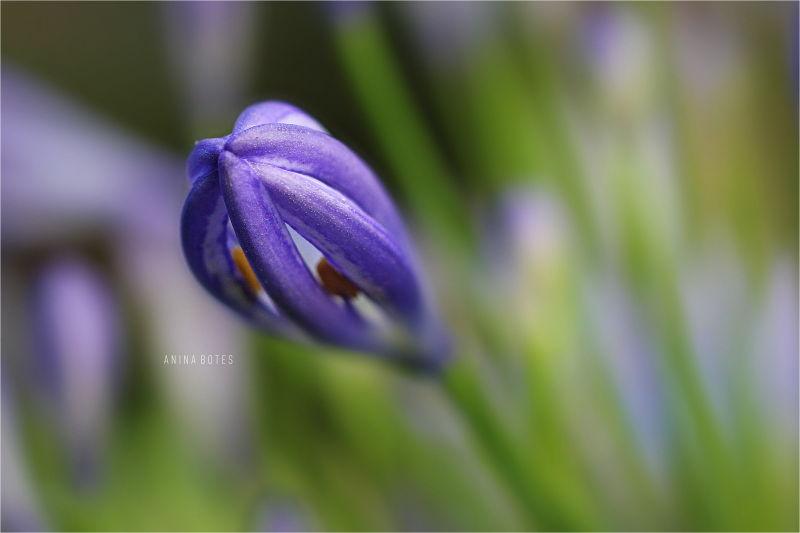 Macro, Flower, 50mm