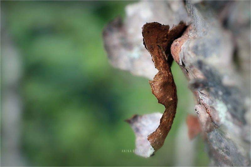 Macro, 50mm, Bark, Tree