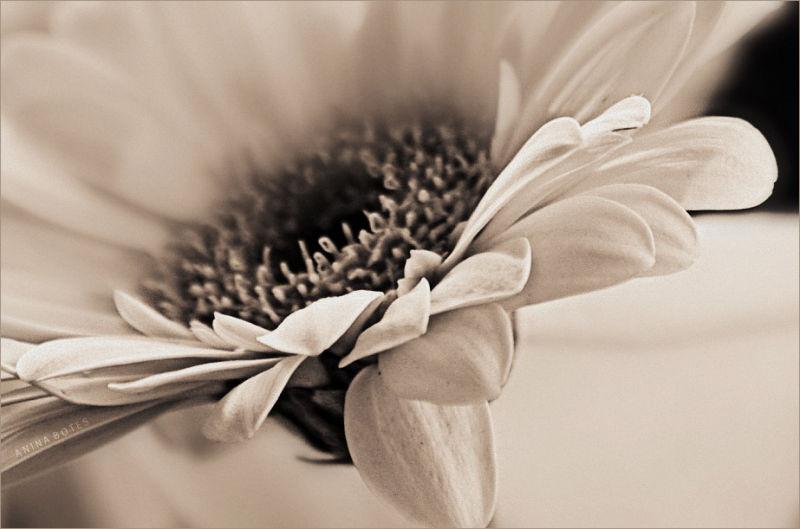 Flower, macro, processed