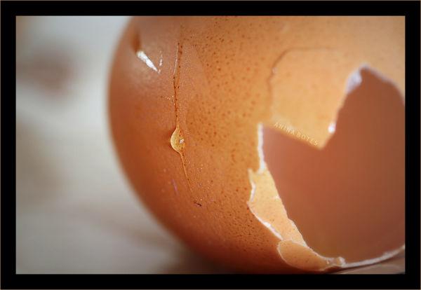 Egg, macro