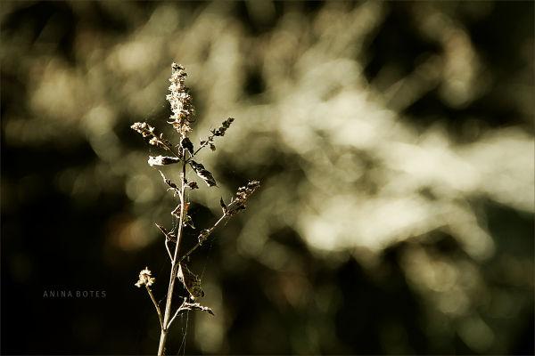 Macro, Plant, Brown