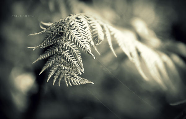 Plant, Mono
