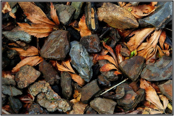 Leaves, Winter
