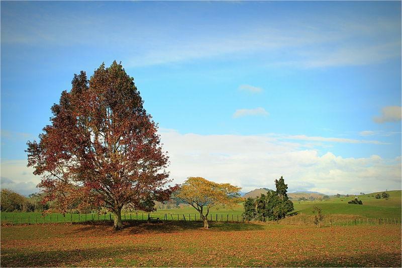 Autumn, landscape