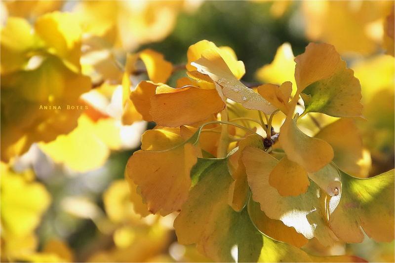 Autumn, yellow, leaves