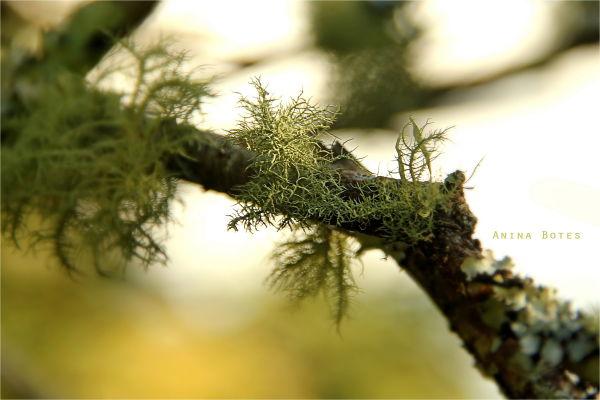 Green, lichen