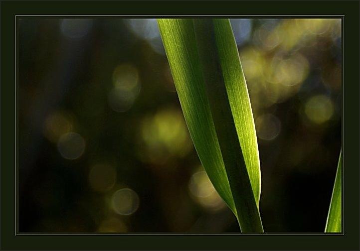 plant, green