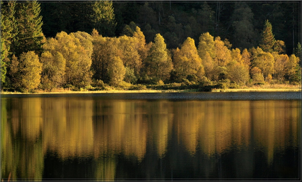 trees, reflections
