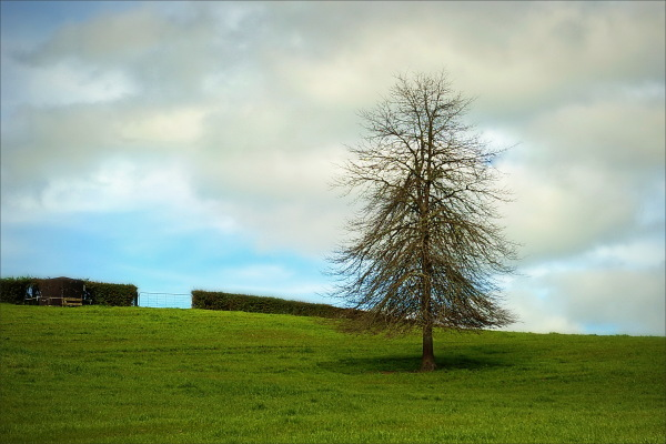 tree, nz, new-zealand