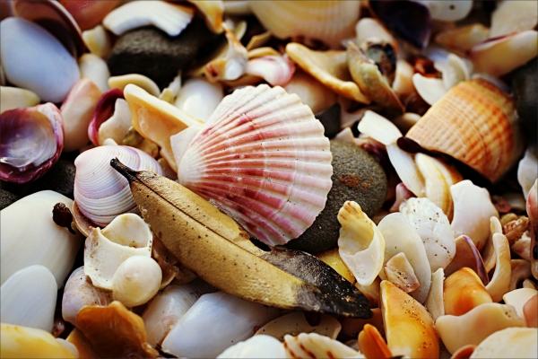sea shells, 50mm, 6d