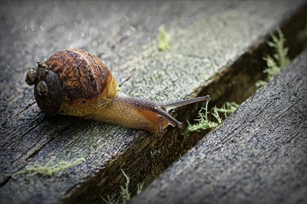 snail, macro