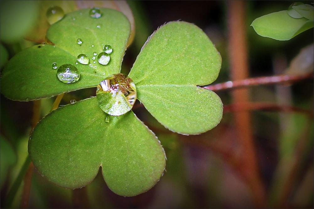 drops, leaf, macro