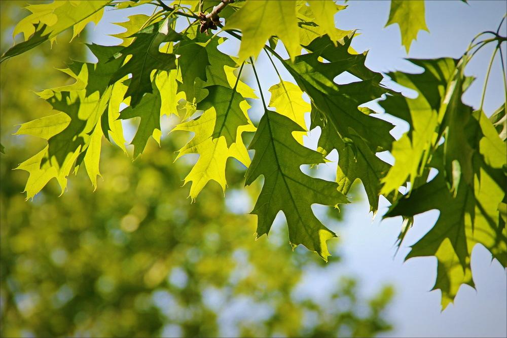 leaves, blue, green